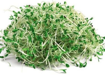 Broccoli sprouts - 60g